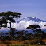 Тур «Восхождение на Килиманджаро» (7 дней)