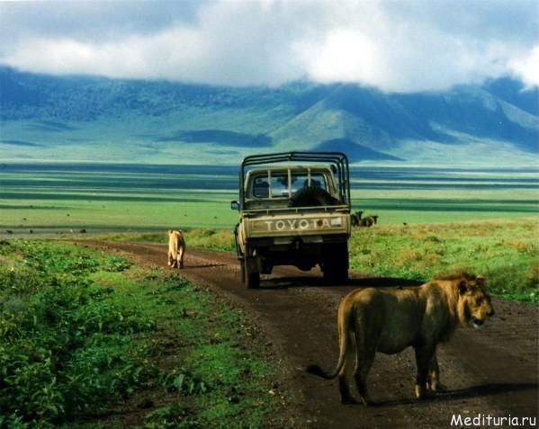 Новый год в Африке «Сафари в Танзании и отдых на Занзибаре»