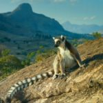 Тур на Мадагаскар «Весь Мадагаскар и отдых на океане»