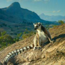 "Тур на Мадагаскар ""Весь Мадагаскар и отдых на океане"""